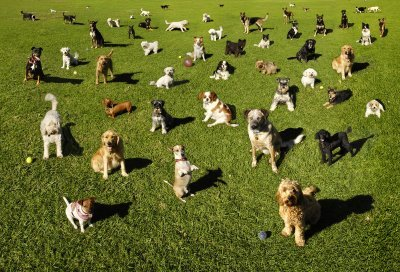 dogs-in-park